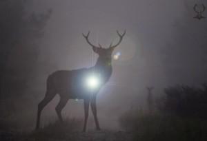Abattage nocturne de cervidés