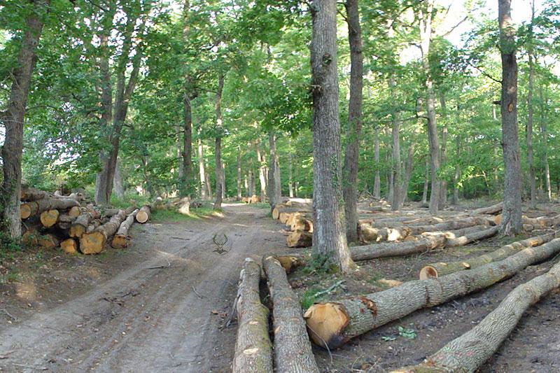 Gestion ONF de la forêt de Troncais