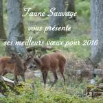 Faune Sauvage, 2016