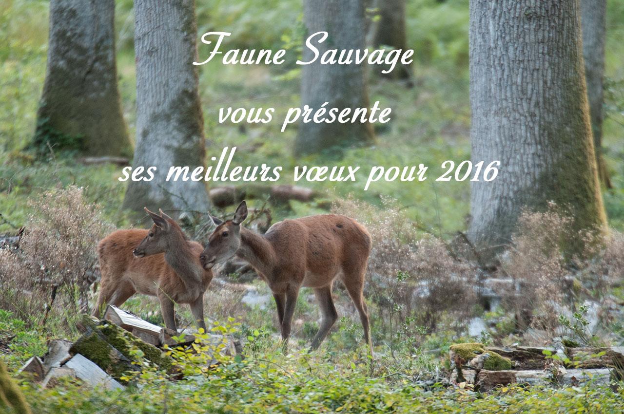 Faune Sauvage vous présente ses meilleurs vœux 2016