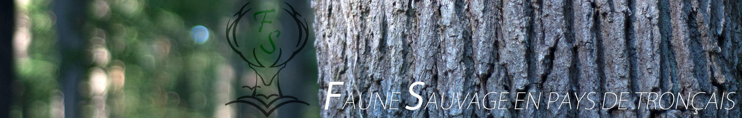 Faune Sauvage en pays de Tronçais