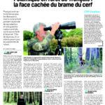 Tir du cerf au brame : le très discret retour en forêt de Tronçais