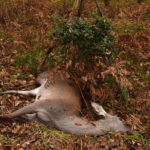 Epineuil-le-Fleuriel: escalade inquiétante …