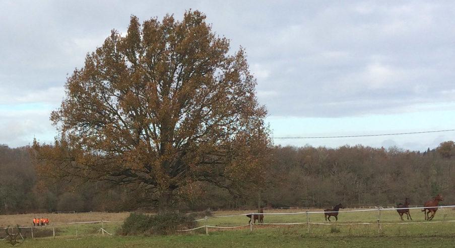 Faune Sauvage en Pays de troncais, abattage et tir en enclos